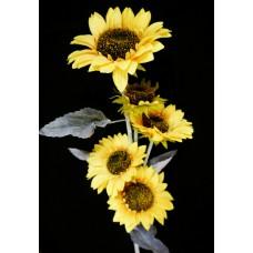 Napraforgó művirág 5 virágú 110 cm