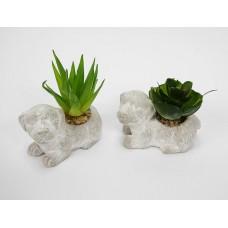 Kutyus mini növénnyel
