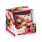 Poharas illatgyertya Santo Tulip 100 g
